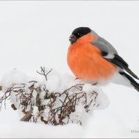 В снежных объятиях зимы :: Анна Солисия Голубева