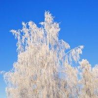Вот такое морозное утро. :: владимир ковалев