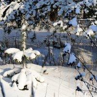 Маленькой сосенке холодно зимой .... :: Иван