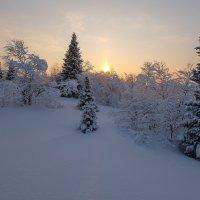 Маленькой ёлочке холодно зимой.... :: Олег Кулябин