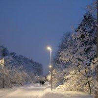 Зимние прогулки :: Анна Воробьева