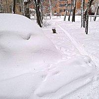 После снегопада :: Елена Семигина