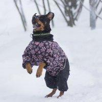Зимняя прогулка :: Елена Волгина