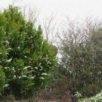 Снег идёт... :: Natalia Harries