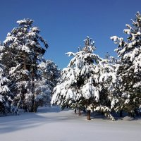 Снежная зима :: Alex Sash