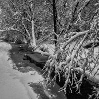Зима берёт своё 4 :: Андрей Дворников