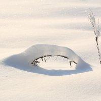 Сегодняшний морозный и солнечный денек!!! :: Ninell Nikitina