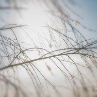солнышко сквозь ветки деревьев! :: Наталья Алексеева