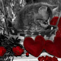 50 оттенков красного :: Татьяна Евдокимова