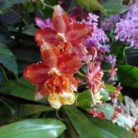 орхидей много не бывает... :: Galina194701