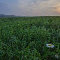 На сенном поле близ села Суходол. :: Igor Andreev