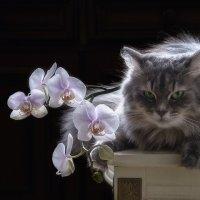 Не будешь ты снимать орхидеи без меня! :: Ирина Приходько
