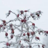 Зимний букет :: Swetlana V