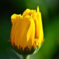 Солнечный цветок :: Татьяна Соловьева