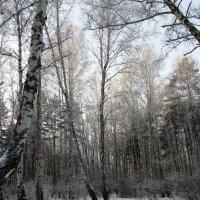 Зима и никаких сомнений :: Татьяна Котельникова