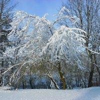 после снегопада :: Людмила