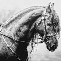 Самая красивая лошадь :: Татьяна Решанова