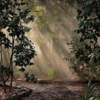 Картины флора-парка :: Alexander Andronik