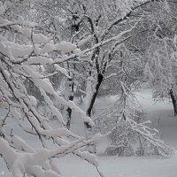 Зима газдує :: Степан Карачко