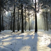Солнце заглянуло в парк :: Galaelina ***