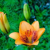 Про цветы :: Милешкин Владимир Алексеевич