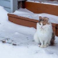 Деревенская котейка :: Александра