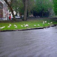 Городские жители :: svetlana.voskresenskaia