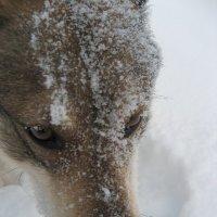 Снег, белый и пушистый ... :: OLLES