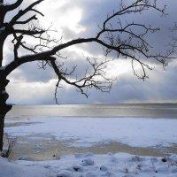 Калининградский залив, на берегу которого стоит город Приморск :: Маргарита Батырева