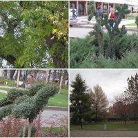 В Центральном парке :: Дмитрий Никитин