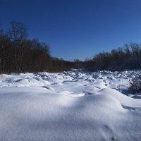 Зимний лес :: Алексей Афанасьев