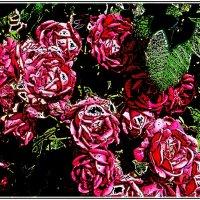 Июньские розы :: Нина Корешкова