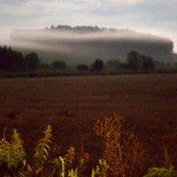 Ночь в тумане :: Анна Шибалина