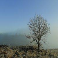 Туман :: Николай Попов