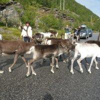 Норвежские пробки :: Валерия Яскович