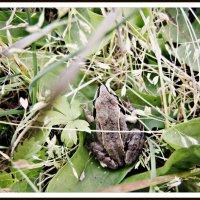 froggy :: Анна Бакеева