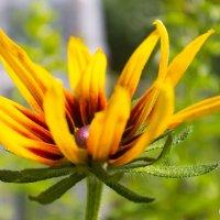 Flower :: Ксения Шелюк