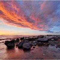 На берегу финского залива :: Алексей Говорушкин