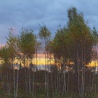 Уж небо осенью дышало :: Александр Творогов