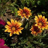 цветы :: Натали Зимина