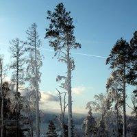 Зимний лес :: Елена Переверзина