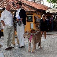 На прогулке в центре Праги... :: Sergey Sergeev