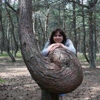 В пьяном лесу :: esadesign Егерев