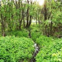в лесу :: Kaya Lekler