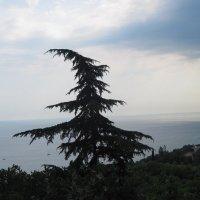 C видом на море :: Маера Урусова