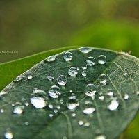 После дождя. :: Мария Ковалёва