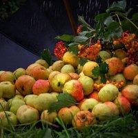 Эх, яблочки.... да под дождичком . :: Ирэна Мазакина