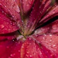 После дождя :: Елена Баландина