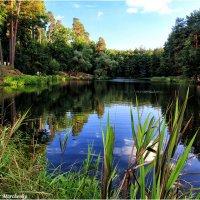 Озеро в лесу :: Виктор Марченко