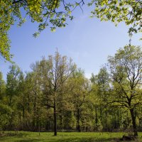 Весна :: Дмитрий Прудников